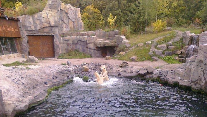 Eisbären im Zoo Hannover
