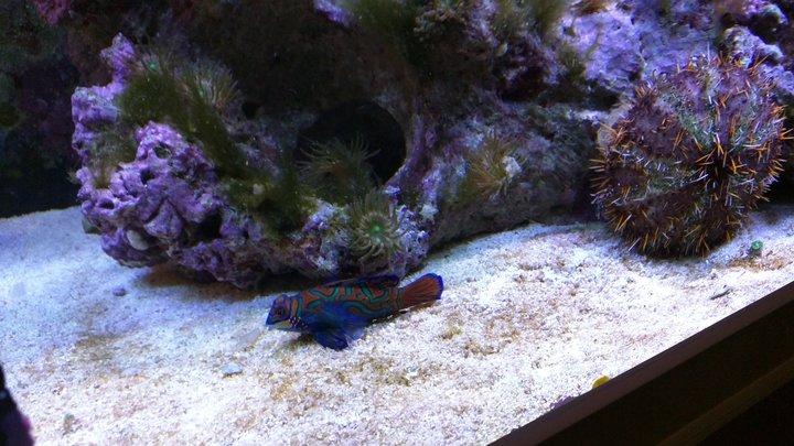 Nemo und Freunde in Lauenburg