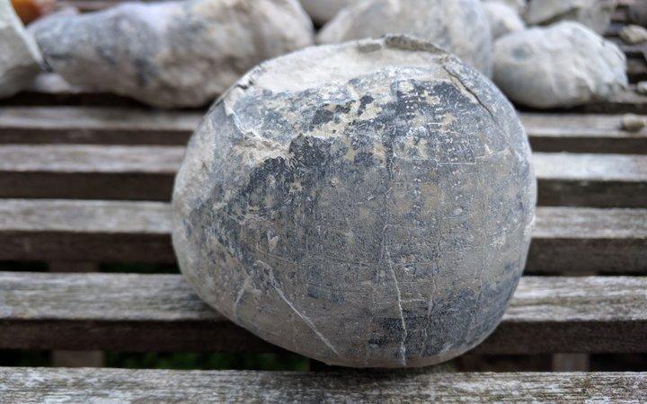 Fossiliensuche im Steinbruch bei Höver