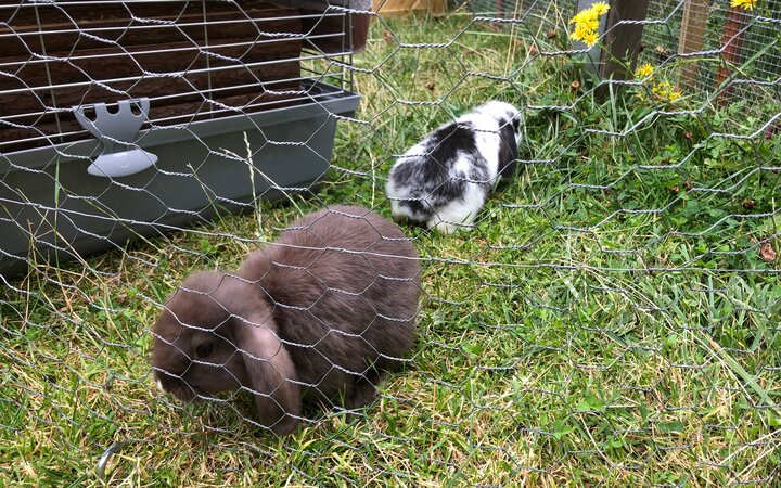 Kaninchen zu Besuch